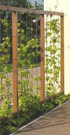 Trellis frame with U-shaped wire ropes. Trellis frame with U-shaped wire ropes - Innen Garten - Eng Back Gardens, Outdoor Gardens, Garden Screening, Garden Trellis, Fence Garden, Wire Trellis, Garden Mesh, Garden Privacy Screen, Rocks Garden