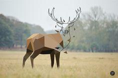Deer Low Poly on Behance