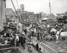 "New York circa 1905. ""Unloading at banana docks."" 8x10 inch dry plate glass negative, Detroit Publishing Company"