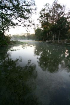 A lovely portrait of Wekiwa Springs State Park by Kristin Hoyer