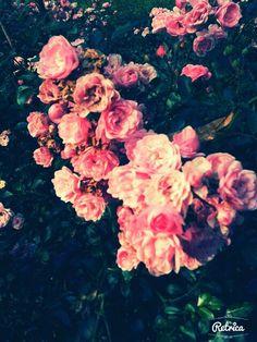 Pink flower :3