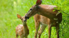Petition · City of Ann Arbor: Cancel plans to massacre 100 deer · Change.org