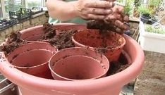 For this week's container gardening tip, we wanted to share a video tutorial from Ian Cooke, a world-renowned horticulturist. Cooke presents a method to properly plant a garden container. (See Video at the end of this post) Step Select a large Container Flowers, Container Plants, Flower Planters, Succulent Containers, Fall Planters, Evergreen Container, Plastic Planters, Succulent Planters, Garden Planters
