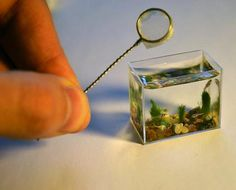 The World's Smallest Aquarium 11 | Zebra Fish smallest aquarium Russian Artist Miniature Plants