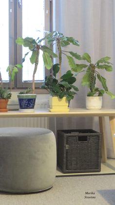 Viherkasvit rentouttavat tätä harmaata olohuonetta. Olohuone, living room, grey decor, harmaa sisustus