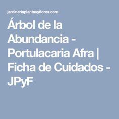 Árbol de la Abundancia - Portulacaria Afra | Ficha de Cuidados - JPyF