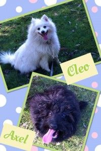 cleo and axel kennels melbourne