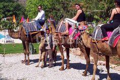 Kayakoy Camel Trekking from Fethiye | Kayakoy camel tour safari http://www.traveltofethiye.co.uk/explore/activities/kayakoy-camel-trekking/