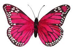 Pink Feather Butterfly 30cm - Butterflies