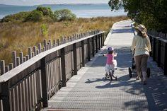 Beachlands Maraetai Walkway