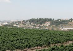 The Dalont Winery in Israel