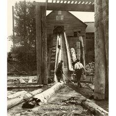 log flume oregon | Hoisting Logs from Pond to Mill at Palmer - White