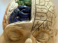(Reuters) Scientists Identify Protein Linking Exercise to Brain Health