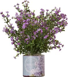 Biarritz Lavender Wildflowers in French Label Vase