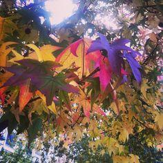 Fall leaves in Paris