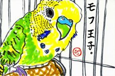 Piimaru / Fluffy Prince  / Budgie Budgerigar Parakeet / Post Card  / Art Print