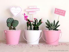 Succulent Planter | 10 Valentine's Day Ideas for Him