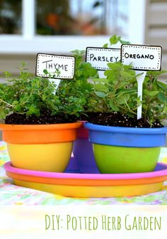Container Gardening - Potted Herbs DIY Potted Herb Garden Michaels RE-Love Challenge by Container Herb Garden, Garden Pots, Potted Garden, Garden Spaces, Garden Projects, Projects For Kids, Garden Ideas, Garden Guide, Diy Projects