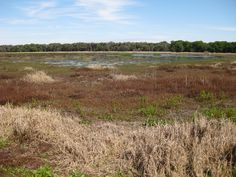 Myakka River State Park -- beautiful marsh view