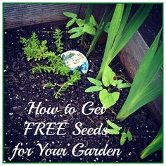 How to get #free #seeds for your #garden