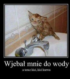 Funny and Too Cute Cats Tuesday Featured Raw Dumps Stupid Funny Memes, Haha Funny, Funny Cute, Hilarious, Animal Memes, Funny Animals, Polish Memes, Weekend Humor, Funny Films