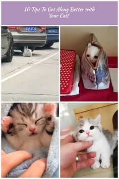 Cat ABS build, How about you today?😼 #lovely #lovelycats #cute #cutecats #pets #pet #cats #cat #catsanddogs #love #funny #funnyvideos funny cats Video Cat workout 🏋️♀️ with car😹