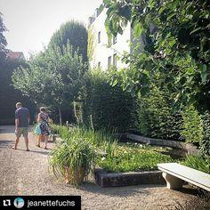 #Repost @jeanettefuchs #insiderei ・・・ #Spaziergang durch den Medizinhistorischen #Garten in #Ingolstadt | #JungeDonau #Bavaria #Germany #walk #summer #nature #mustsee  #herbs & #drugs & #poison come in #beautiful #green settings #fromwhereistand #travelwithme