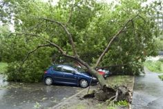 Finding the Best Alpharetta Emergency Tree Removal Service