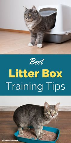 Training your cat to use a litter box doesn't have to be hard. Discover simple tips to help you train your cat to use a litter box. Plus, what is the best cat litter to use, and lots more. #litterboxtrainingcats #catlitterboxtraining #cattraining #catlittertraining Paper Cat Litter, Best Litter Box, Getting A Kitten, Cat Care Tips, Feral Cats, Cat Life, Training Tips, Cool Cats