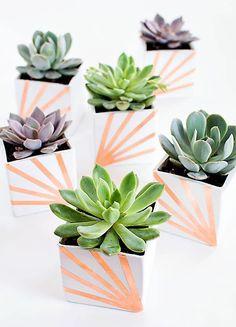 Minik bitkilerin saksıları da onlara uygun olsun!