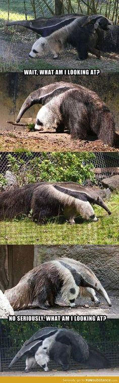 Sadly, it took me a minute to realize that wasn't an anteater and his panda bear friend eating.