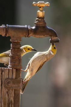 Törstig...