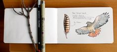 Red Tail Hawk: Sketches from Afsaneh Tajvidi, a Toronto-based artist