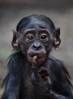 baby monkey!!                                                                                                                                                                                 More