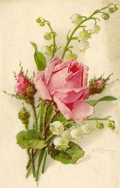 Artist Catherine Klein pink rose with lily of the valley by Quella Catherine Klein, Art Floral, Vintage Prints, Vintage Art, Coming Up Roses, China Painting, Rose Art, Lily Of The Valley, Vintage Pictures