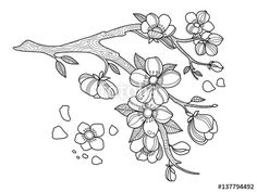 download the royalty free vector cherry blossom coloring book vector illustration designed by - Cherry Blossom Tree Coloring Pages