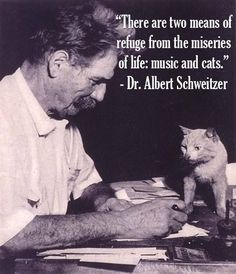 Yes Funny Cats, Funny Animals, Cute Animals, Crazy Cat Lady, Crazy Cats, Feral Heart, Celebrities With Cats, Men With Cats, Albert Schweitzer