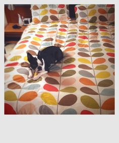 Official Orla Kiely online store with a huge range of our iconic Bags, Clothing, Accessories and Home. Retro Caravan, Orla Kiely, Little Dogs, Bed Covers, Bed Spreads, Fabric Patterns, My Photos, Sweet Home, Kids Rugs