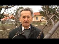 Jak správně ostříhat ovocný strom - YouTube Gardening For Beginners, Gardening Tips, Fruit Plants, Industrial Farmhouse, Animals And Pets, Garden Design, Life Hacks, Pergola, Home And Garden