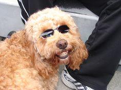 Really?! A dog with #braces?? www.loudounorthodontics.com #LoudounOrtho