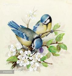 Blue tits on blossom