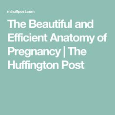 The Beautiful and Efficient Anatomy of Pregnancy | The Huffington Post
