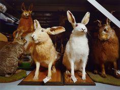 Neil Pardington - Land and Marine Mammal Store Nz Art, 5 Image, Artistic Photography, Mammals, Kangaroo, New Zealand, Bird, Gallery, Biography