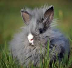 Super-Fluffy Bunny Enjoys Outdoor Time, by dailybunny.org