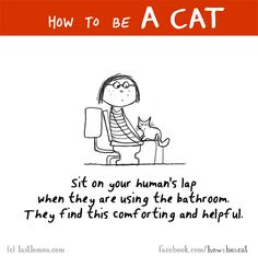 HOW TO BE A CAT: Sit on your human's lap when they are using the bathroom. They find this comforting and helpful.