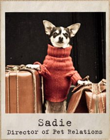 """A Travelling Chihuahua: ♬ """"All my bags are packed, I'm ready to go. I'm leaving on a jet plane, don't know when I'll be back again."""" ♫ ♪ (Captioned By: Lynn Chateau. Cute Chihuahua, Chihuahua Puppies, Chihuahuas, I Love Dogs, Cute Dogs, Dog Friendly Hotels, Cute Dog Clothes, Mundo Animal, Dog Sweaters"""