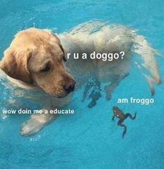 In today's episode of #doggo meets #froggo... #DogMom #DogDad #AdoptDontShop #DogLover #LoveDogs #RescueDog #ShelterDog