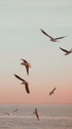 Birds over the sea. Beach Aesthetic, Summer Aesthetic, Aesthetic Photo, Aesthetic Pictures, Aesthetic Vintage, Travel Aesthetic, Book Aesthetic, Aesthetic Collage, Aesthetic Backgrounds