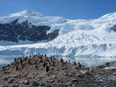 penguins! #Antarctica