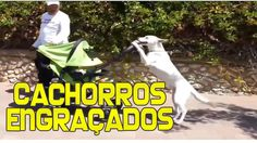 Videos Engraçados de Cachorros - Os Vídeos Mais Engraçados de Cachorros ...